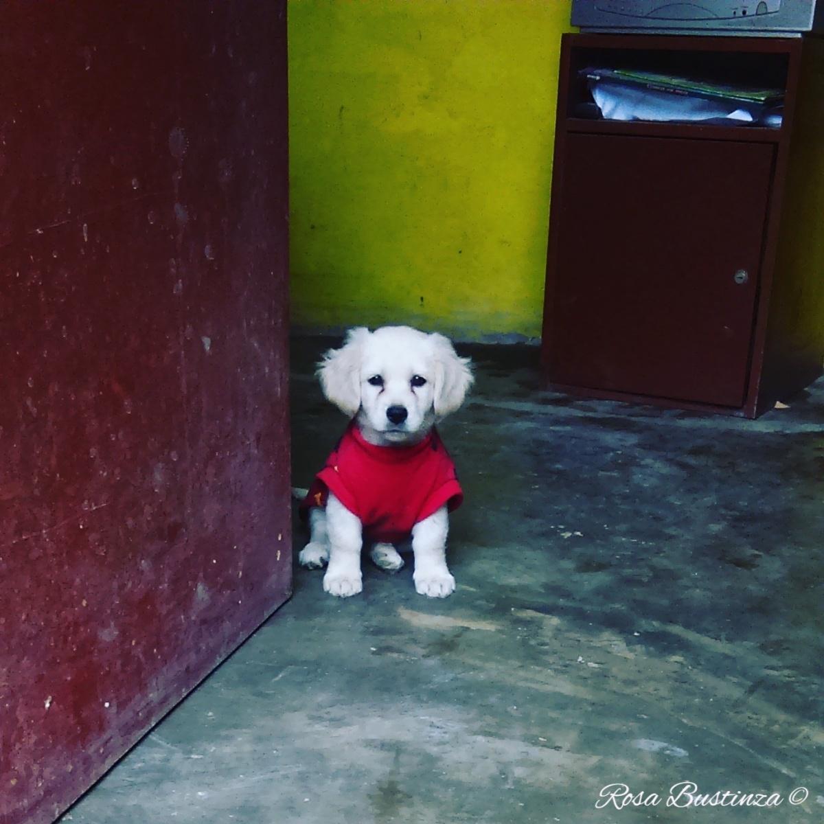 La perrita blanca